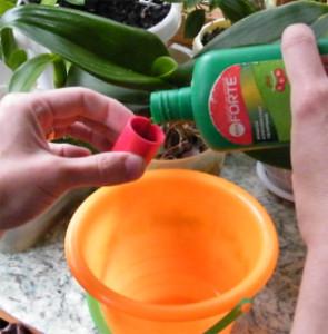 Подкормки и удобрения для орхидеи Цимбидиум