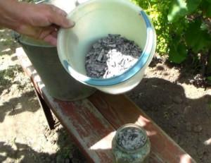 Удобрения для бадана