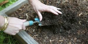 Почва для армерии