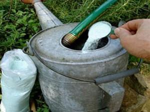 Подкормка растений эшшольция смесью фосфора