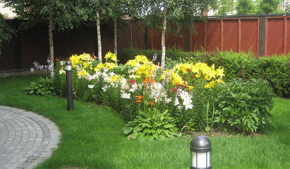 Лилейники в садовом дизайне
