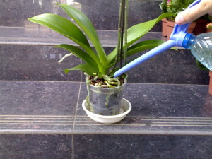 Полив орхидея Ванда