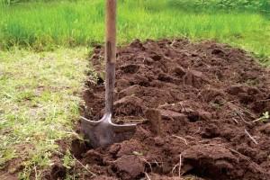 Подготовка почвы для вербейника монетчатого
