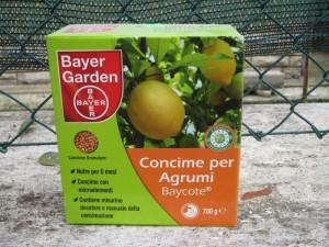 Подкормка муррайи удобрениями для цитрусовых