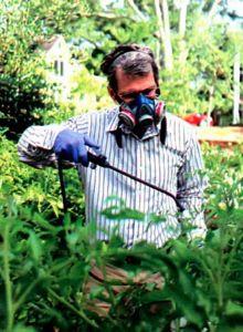 Обработка растений препаратами