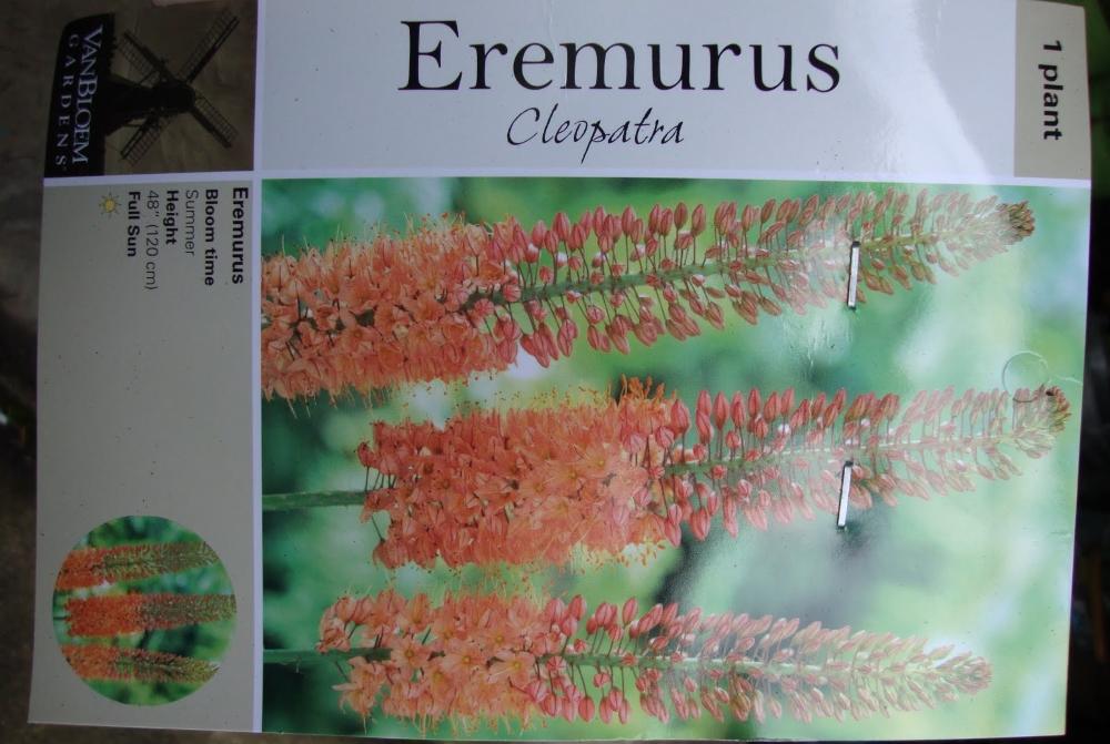 Эремурус