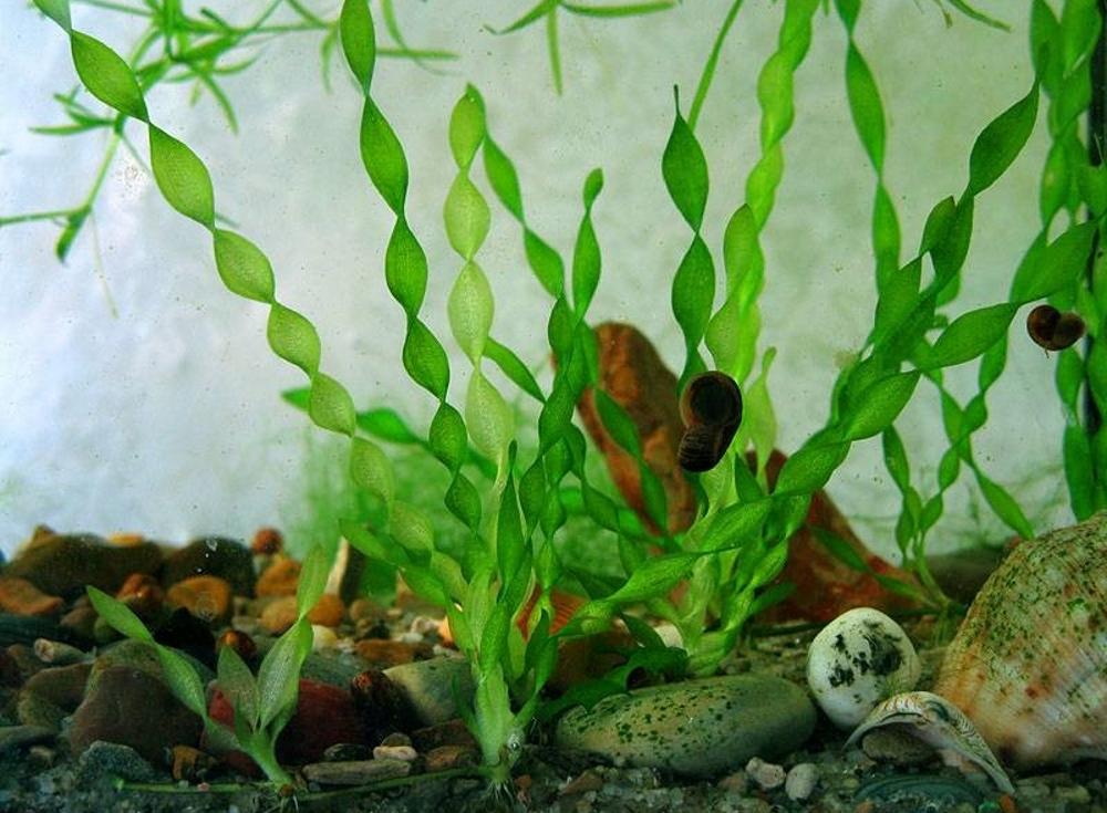 как сажать водоросли в аквариум с фото касается макияжа женщины